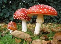 Colleges: Like mushrooms