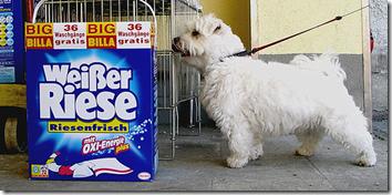 Henkel's White Giant: Not on Indian shelves
