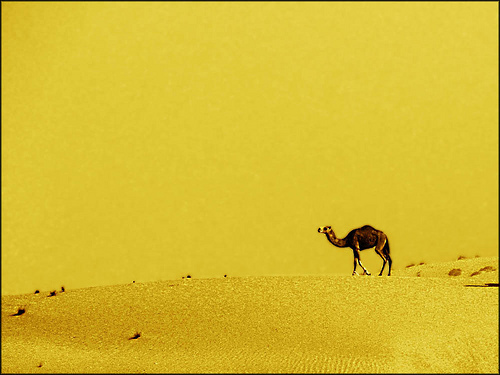 Dubai_desert-by_Untitled_blue
